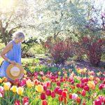 ce flori plantezi in gradina